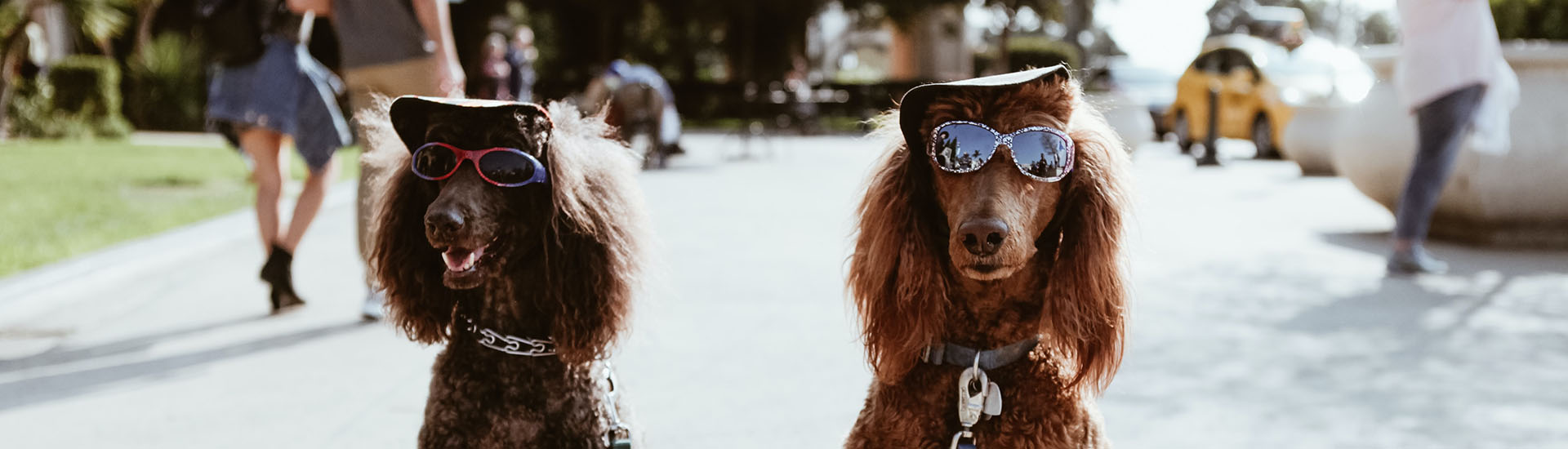 how to include your dogs at your wedding